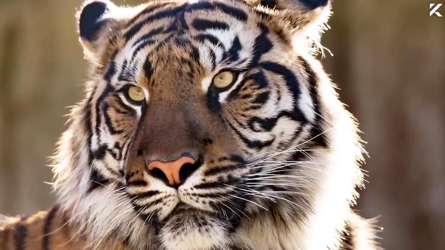 10 تا از عجیب ترین رابطه جنسی با حیوان در آمریکا | از مار تا دایناسور و ببر!