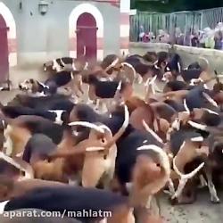 حمله انفجاري سگ ها به سمت غذا