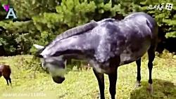 کلیپی جالب از صدای حیوا...