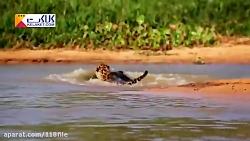 کلیپ وحشتناک شکار حیوا...