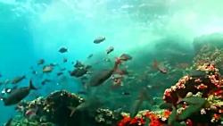10 تا از عجیب ترین رفتارهای موجودات دریایی