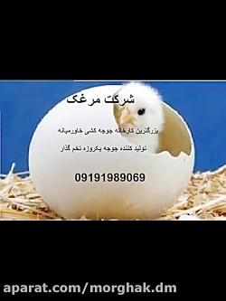 فروش جوجه یکروزه تخمگذار فروش تخم مرغ