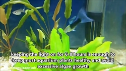 آیا ماهی گوپی ها می خوابند؟