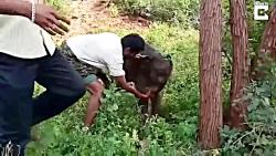 حمل کردن فیل کوچولو روی شانه!