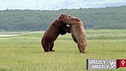 10 تا از دیوانه وارترین جنگ های حیوانات در حیات وحش و باغ وحش