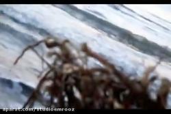 موزیک ویدئو مادمازل