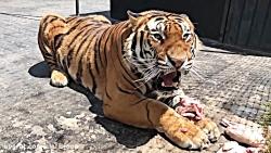 یکی از بهترین شکارچیان حیات وحش را از نزدیک ببینید