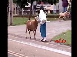 عصبانیت حیوانات