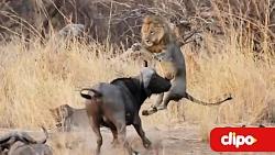 ده نبرد خونین حیوانات