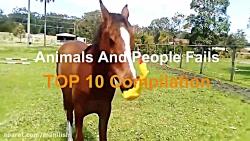 کار های بامزه و جالب حیوانات
