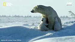 به طبیعت زیبای قطب شمال بریم و نبرد دو خرس قطبی رو تماشا کنیم...