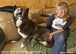 رابطه  این زن با حیوانا...