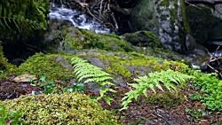 ✅ آرامش طبیعت رودخانه،...
