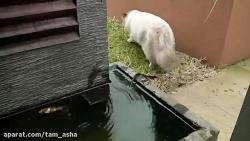 نجات حیوانات توسط سایر حیوانات (تصاویر نادر)