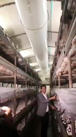 بازدید از کارخانه قارچ کاملا مکانیزه پارس شهریار