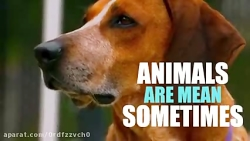 فیلم خنده دار حیوانات