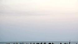 فیلم کوتاه ساحل