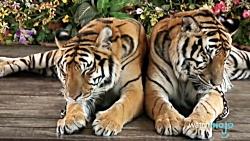 10 از برترین حیوانات درن...