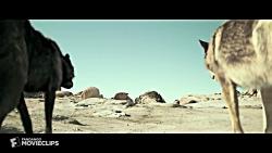 فیلم Alpha (2018) سکانس درند...