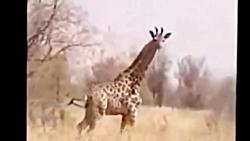 20 تا از بهترین شکارهای حیوانات در حیات وحش آفریقا