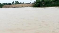 حضور دلفین در رود کارون پس از سیل خوزستان