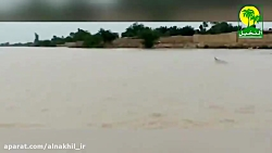 فیلمی واضح از وجود دلفین در رودخانه کارون پس از سیل