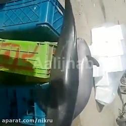 شکار و فروش دلفین هایی که در رودخانه کارون پس از سیل خوزستان دیده شدند!
