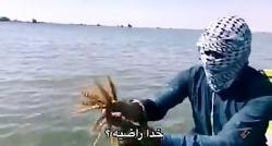 گندمزاری زیر دریا! روست...