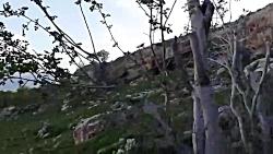 کازرون.روستای قلعه سید