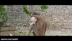 فیلم سینمایی کوه Monte 2016 با دوبله فارسی ساخته امیر نادری HD