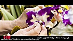 فیلم سینمایی از این سبز...
