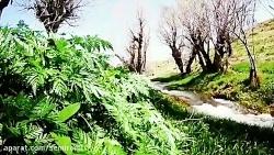 طبیعت بهاری سمیرم - فرو...