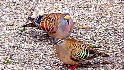 زیباترین پرندگان جهان