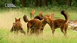 حیات وحش - شکار حیوانات وحشی