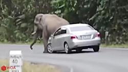 حمله وحشتناک حیوانات ب...
