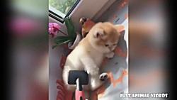 بامزه ترین و خوشگل ترین حیوانات خانگی - کلیپ جدید