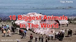 10 تا از بزرگترین و وحشی ترین حیوانات جهان