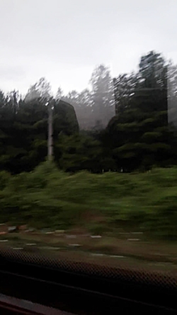 در راه تهران