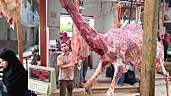 عید قربان - شتر
