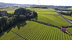 ژاپنی ها چطور چایی تولید می کنند -مزرعه چای در ژاپن