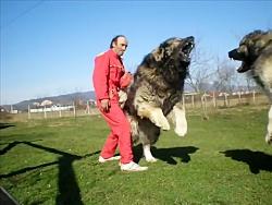 جنگ بین سگ های وحشی