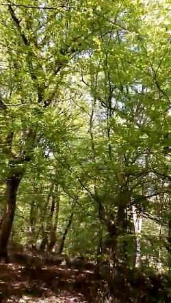 طبیعت زیبای مازندران..(...