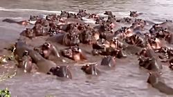 جنگ حیوانات - Wildlife Lured - ...