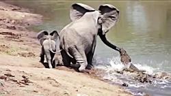 نجات غیرباورکردنی حیوا...