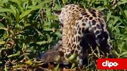 ده نبرد عجیب حیوانات
