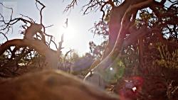 فیلم مستند از طبیعت کوی...