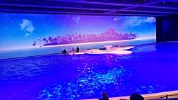 شنای دلفین نمایشی