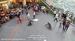 ایجاد باغ وحش واقعیت اف...
