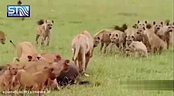 گونه های جانوری در حال ...