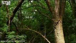 تاثیر درختان بر کیفیت و...
